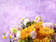 Fragment Of Colorful Chrysanthemums Bunch Royalty Free Stock Images