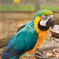 Free Blue And Yellow Macaw Stock Photos - 23985893