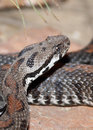 Free Snake Royalty Free Stock Photo - 23986265
