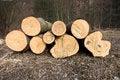 Free Fallen Tree Trunks Stock Image - 23989841