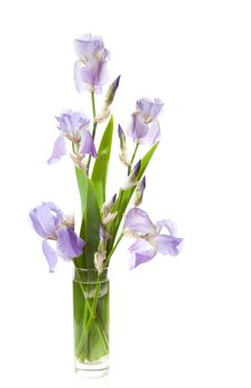 Free Bouquet Of Spring  Irises In A Transparent Vase Royalty Free Stock Photo - 23980075