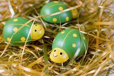 Free Green Ladybugs Stock Photos - 23981333