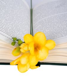 Free Open The Book And Freesia Royalty Free Stock Image - 23983246