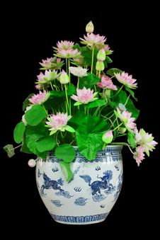 Free Lotus On Black Royalty Free Stock Photography - 23986917