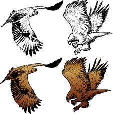 Free Flying Eagle Stock Photos - 23987883