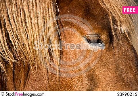 Free Horse Head Detail Royalty Free Stock Photo - 23990215