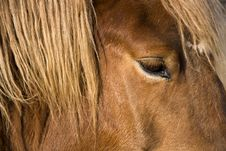 Free Horse Head Detail Royalty Free Stock Photo - 23990215