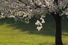 Free Spring Bloom Stock Images - 23995394