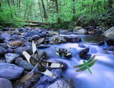 Free Dragonflies Gliding Over Mountain Stream Royalty Free Stock Photos - 23995548