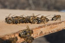 Air Baths For Young Bees Stock Photos