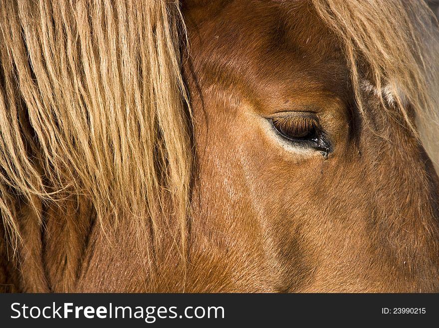 Horse head detail