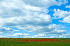 Free Poppy Field With Powerlines Stock Photos - 240103