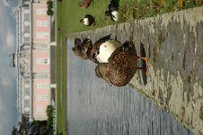 Free Flock Of Ducks Stock Image - 240481