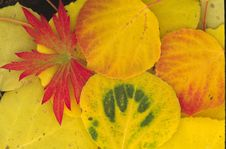 Free Autumn Red And Green Royalty Free Stock Photography - 243057
