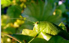 Free Insect Detail Royalty Free Stock Photos - 245268