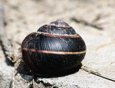 Free Snail Stock Image - 245721