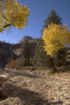 Free Autumn In Zion Stock Photo - 247840