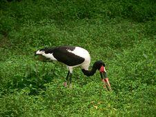 Free Bird Eating Stock Photo - 248030
