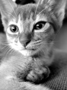 Free Midnight Cat 1 Royalty Free Stock Image - 248836