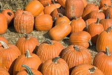 Free Pumpkins Stock Photography - 249202