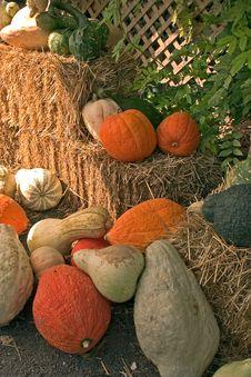 Free Pumpkins Stock Image - 249351