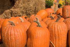 Free Pumpkins Royalty Free Stock Image - 249356
