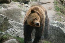 Free Bear Bath Stock Photos - 2401563