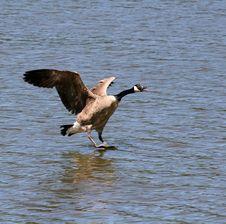 Free Stand Up Landing Stock Image - 2401951