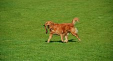 Free Game Of Fetch Stock Images - 2402174
