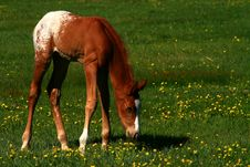 Free Spring Colt Stock Photo - 2402680