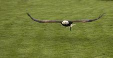 Free Raptor Stock Image - 2403691