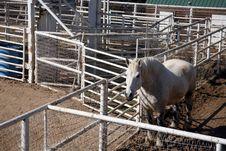 Free Horse Royalty Free Stock Photo - 2405525