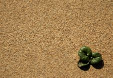 Free Sand Leaves Stock Photography - 2405672