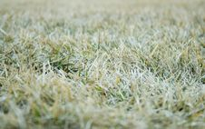 Free Green Grass Stock Photo - 2406080