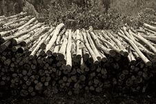 Free Pile Of Firewood Stock Images - 2406764