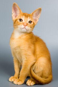 Free Kitten In Studio Stock Photos - 2407413