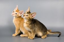 Free Kittens  In Studio Royalty Free Stock Images - 2407429