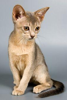Free Kitten In Studio Stock Image - 2407471