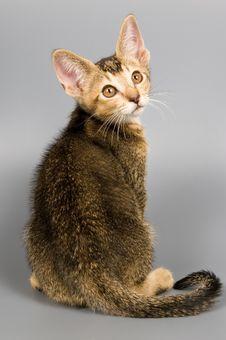 Free Kitten In Studio Stock Photos - 2407493