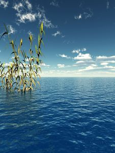 Free Water Plants Royalty Free Stock Photos - 2408838