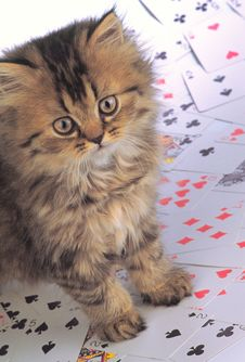 Free Kitten Look And Playing Cards Royalty Free Stock Photo - 2408845