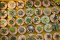 Free Cactus Species. Stock Photos - 24008233