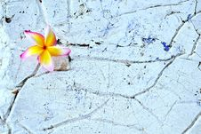 Free Flower On The Texture Royalty Free Stock Photos - 24006578