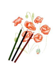 Free Poppy Royalty Free Stock Image - 24008336