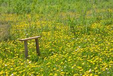 Free Wooden Bench On The Dandelions Field Stock Image - 24008921