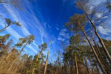Free Deep Blue Sky, Stratus Clouds And And Trees Royalty Free Stock Photos - 24009408
