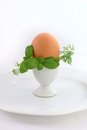 Free Egg In Eggcup Stock Images - 24014344