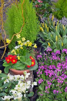 Free Early Spring Garden Royalty Free Stock Photos - 24014538