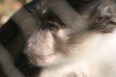 Free A Monkey Face Royalty Free Stock Photos - 24015368
