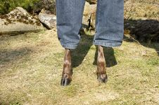 Free Deer Dressed In Jeans Stock Photos - 24017453